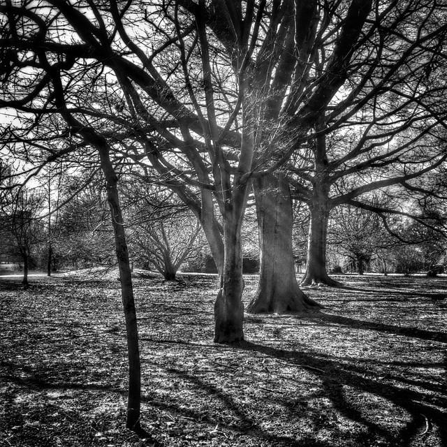Treeline #POTD