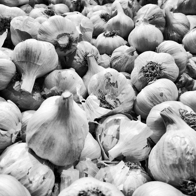 Lots of Garlic #POTD