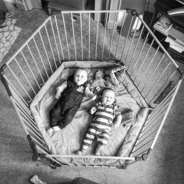 So, we bought a cage... #POTD