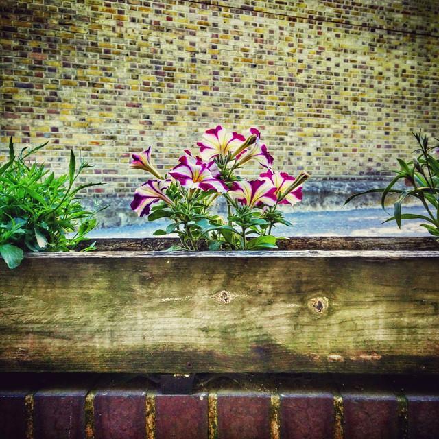 Flowers in a box. #POTD