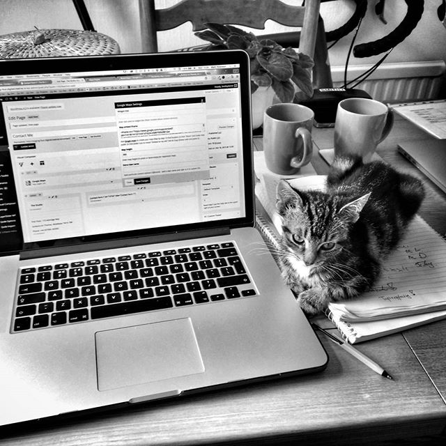 Had this lil guy as my desk buddy while working with @smithy_creative #catsofinstagram #DontLikeCats #ButThisGuy #POTD