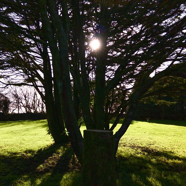 The garden through the trees creating a beautiful #shilouette. #NorthDevon #WeekendAway #POTD